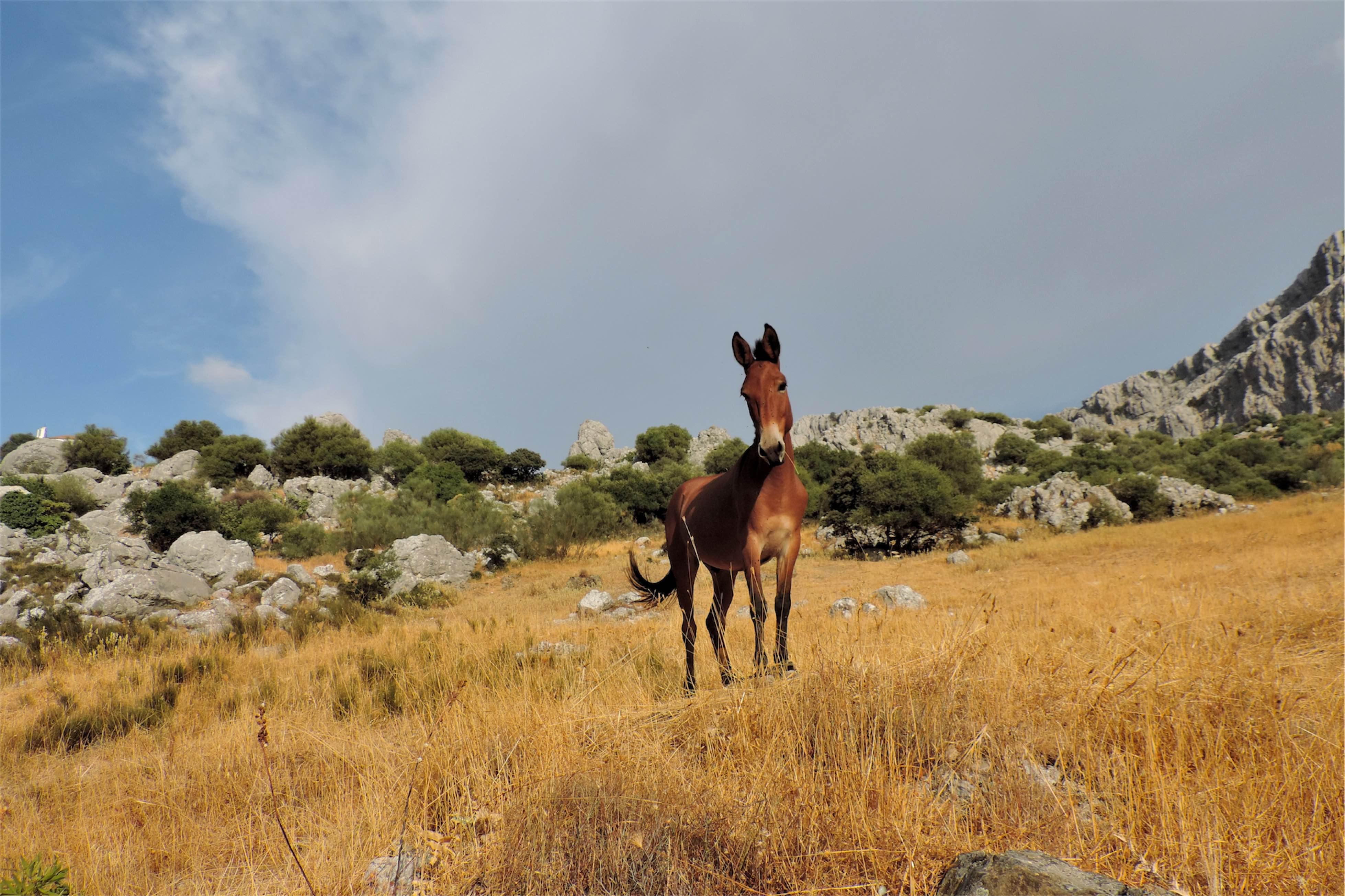 Park narodowy Sierra de Grazalema w Andaluzji
