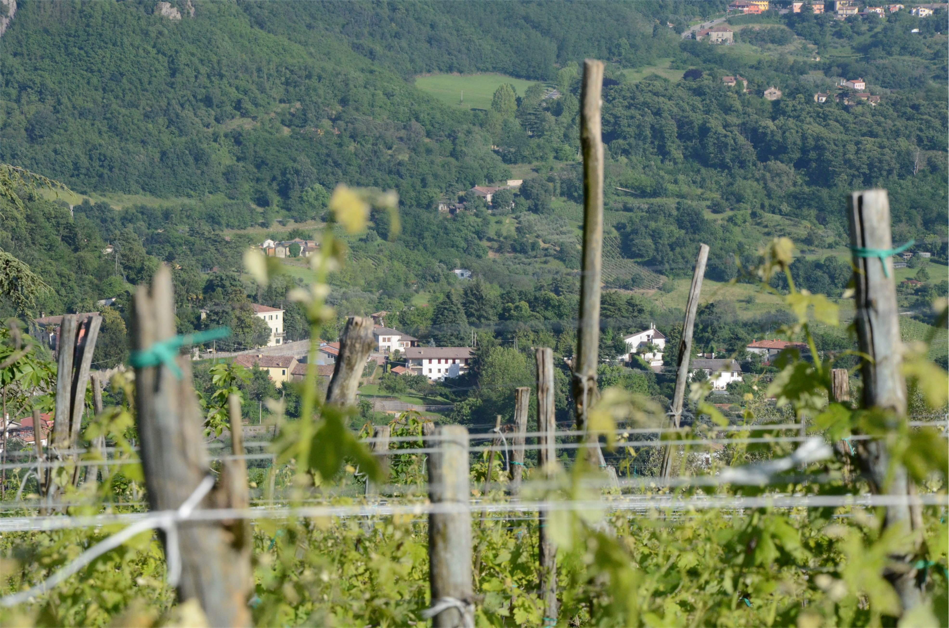 Krajobraz Colli Euganei w regionie Veneto w północnych Włoszech, winnice wśród wzgórz